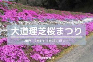 大道理芝桜まつり2019